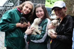 Alaska Community Service caring for puppies