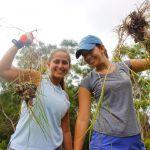 Maui's Delicate Balance - Hawaii Community Service 1