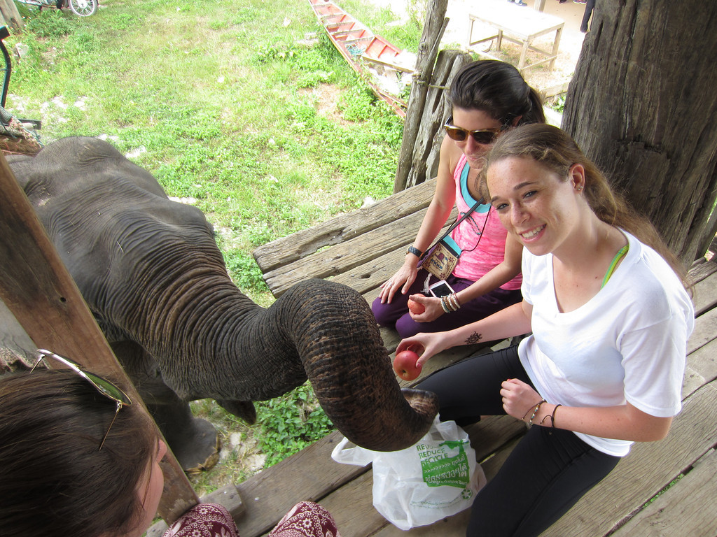 Trip Members Feeding the Elephants