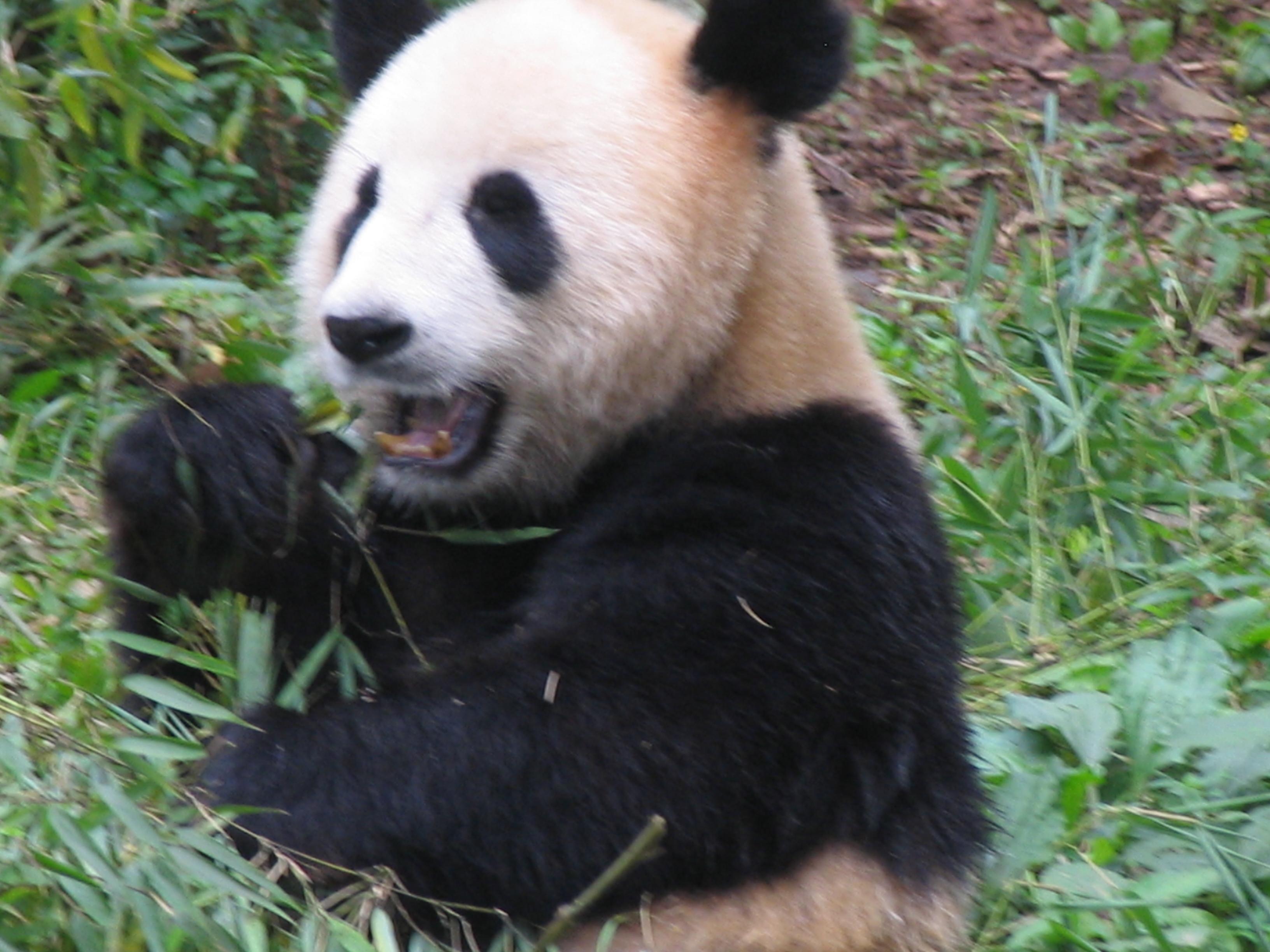 China 1 554
