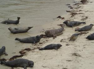 Seals, Seals and More Seals