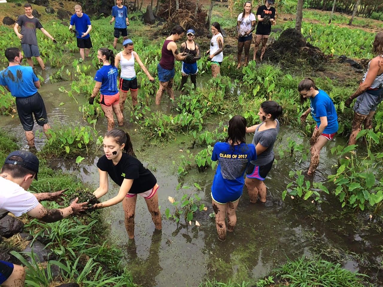 t1 blog 3 photo 2 thailand chiang mai